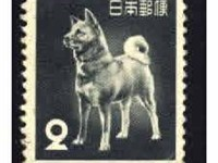 "The Akita ""Tachibana"" (one of the very few purebred Akitas that survived World War II) was used on a"