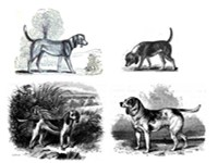 Early images of the Beagle (clockwise from top left): 1833, 1835, Stonehenge's Medium (1859, reusing