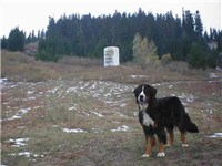 Bernese Mountain dog on mountain