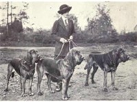 Bloodhounds circa 1915