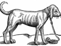English Bloodhound 1563