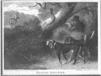 A brace of bloodhounds used to find deer for the gun 1826