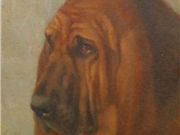 A probable ancestor of all today's pedigree bloodhounds, 1902