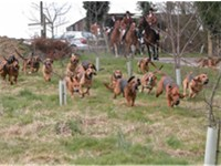 The Coakham pack of bloodhounds starting a human trail in England