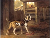 Painting of a bulldog from 1790 by Philip Reinagle.