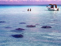 Stingrays are one of the biggest tourist attractions.