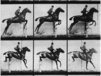 Muybridge sequence of a horse jumping.
