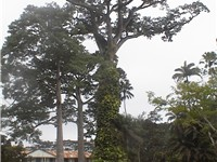 Aburi Botanical Gardens