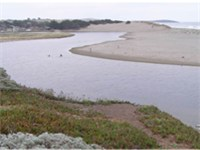 Mouth of Russian River, looking south with Goat Rock Beach at right.