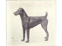 Irish Terrier circa 1915