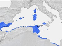 Carthage and its dependencies in the 3rd century BC. It was one of a number of Phoenician settlement