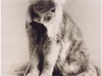 Cosey, a Maine Coon and the winner of the very first cat show in the United States, May 8, 1895