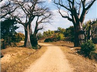 A typical road in Malawi