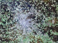 Satellite image of Moscow and suburbia