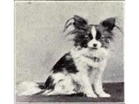 A Papillon from 1915.
