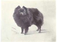 A miniature Pomeranian from 1915