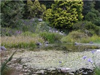 Pond at Dwarf Conifer collection of SF Botanical Garden