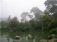 McBean Wildfowl Pond and Primitive Plant Garden at SF Botanical Garden