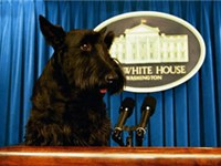 Barney, the Scottish Terrier belonging to former President George W. Bush, on the presidential stand