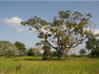 Landscape of Casamance.
