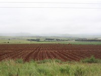 Workers planting on a farm in the central area of Mpumalanga.