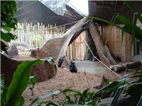 The Gorilla Rainforest exhibit.