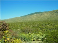 Saguaro National Park is near Tucson