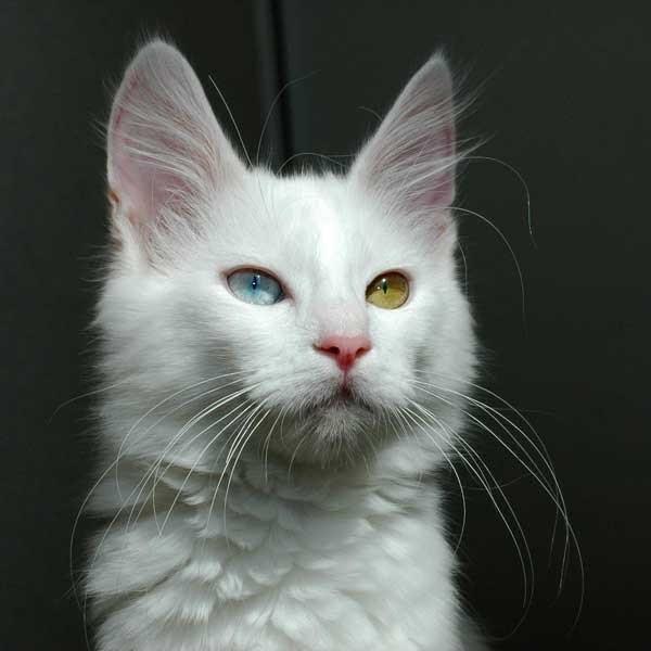 Warrior Cat Heathergaze