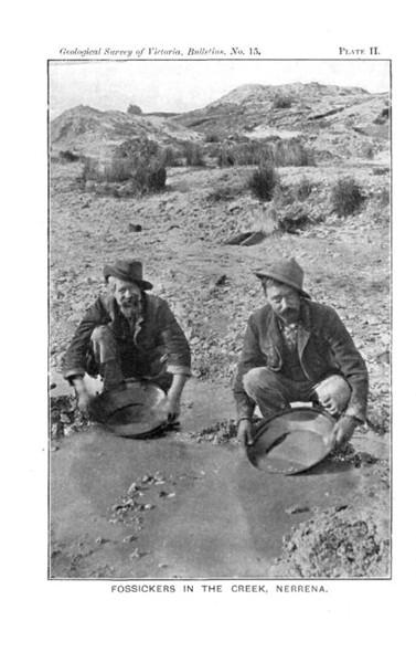 australian gold rush tools. hot Australian gold rush of